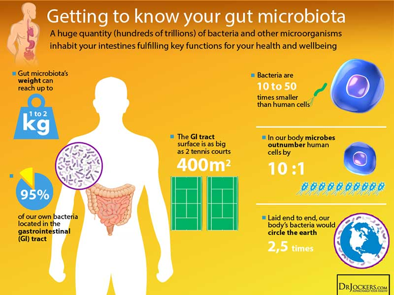 What is our Gut Microbiome?